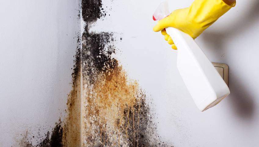 Importance Of Using Organic Materials For Mold Removal